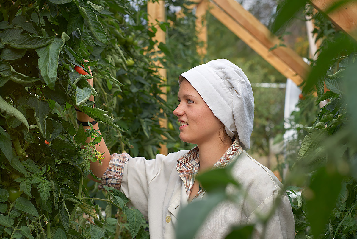 Picking Tomatoes in the GISS Cafeteria Garden (John Cameron)
