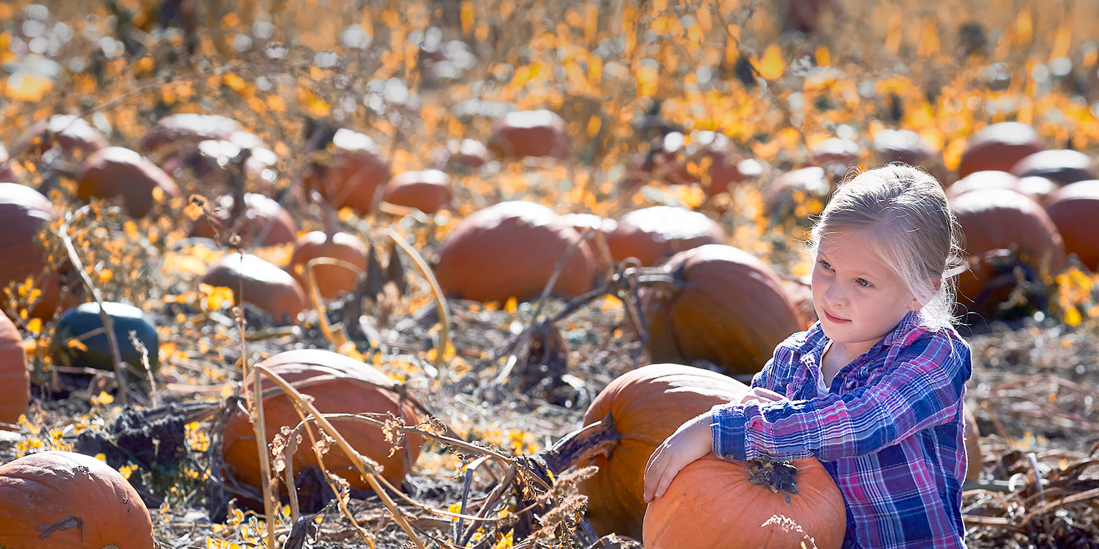 Fulford Student at Bond's Pumpkin Patch  ©johncameron.ca